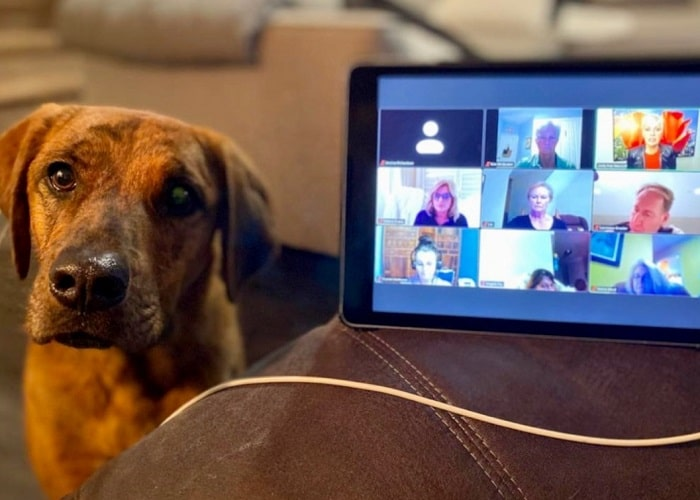 2020 AADOM chapter meeting with a dog